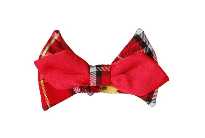 papillon scozzese rosso